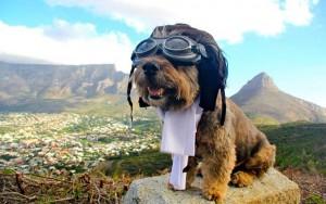 Oscar-perro.viajero