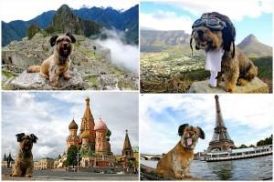 oscar-perro-viajero-2