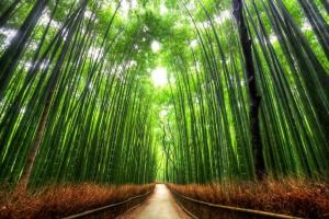 paseo-de-bambu-kyoto-japon
