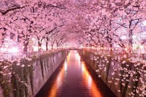 tunel-de-arboles-en-sakura-japon