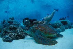 Diver with turtle at the hotel Le M?ridien Bora Bora.