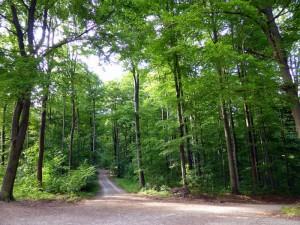 Bosque Teutonico5