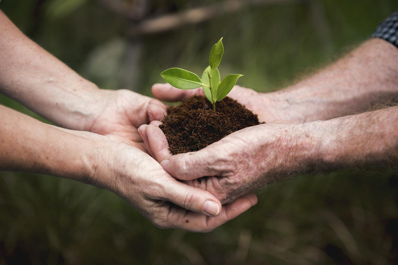 Cuidar el ambiente